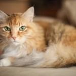 本日の美人猫vol.111