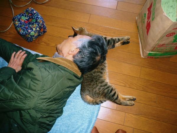 141119morimura01 600x450 - 作家・森村誠一氏の公式サイトに、猫写真満載のページを発見