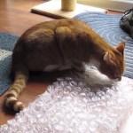プチプチつぶしを趣味にする猫、一心不乱につぶし続ける