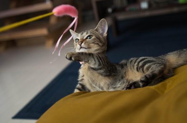 141127cat 600x396 - 本日の美人猫vol.113