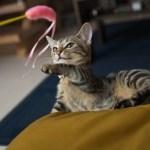 本日の美人猫vol.113