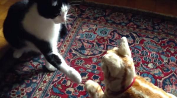 141130necoro 600x333 - 猫ロボNeCoRoと出会う猫、絶妙なタイミングで互いに前脚を差し出す