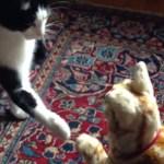 猫ロボNeCoRoと出会う猫、絶妙なタイミングで互いに前脚を差し出す