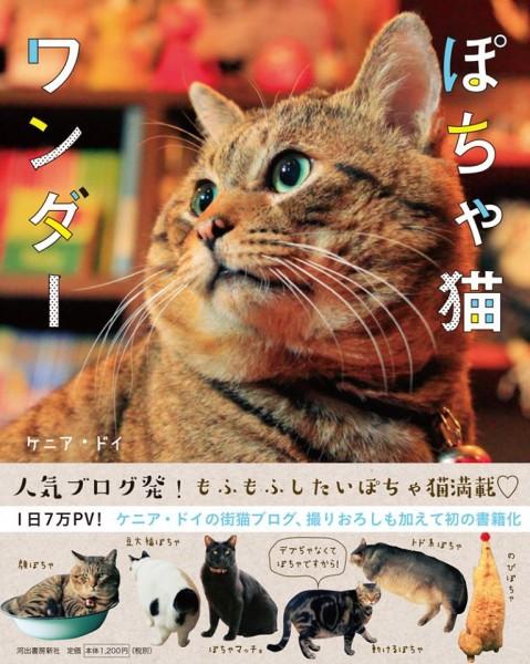 141202potyaneko03 479x600 - ふくよかな猫たち、写真集にてフォトジェニックな姿を披露
