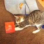 Xmasメロディカードと戦う猫、浮かれ気分に警鐘を鳴らす