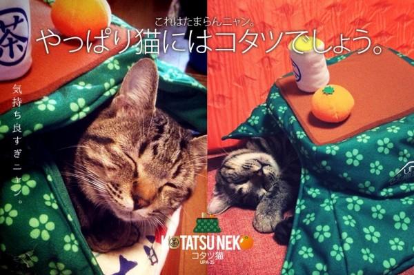 141221kotatsu02 600x399 - 炬燵の着ぐるみを検分する猫、頭隠して尻隠さず状態に