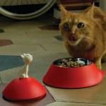 真っ赤なお皿で食事する猫、舌を出してご満悦顔