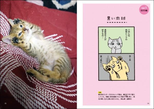 141225nekoniko02 600x427 - 表情豊かな島々の猫、ゆるーい漫画のモデルになる
