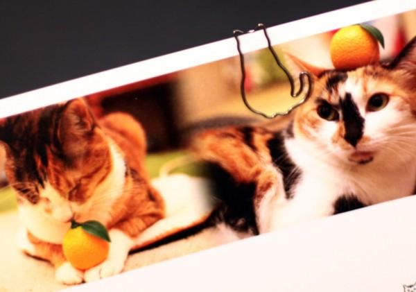 150105dclips01 600x421 - ちょこんと座った猫、その姿のままクリップになる