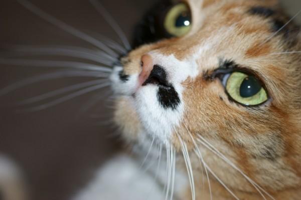 150202catday 600x399 - 2月22日の猫の日特集に向け、「猫の日イベント」「猫の日特設サイト」情報募集中