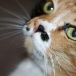 2月22日の猫の日特集に向け、「猫の日イベント」「猫の日特設サイト」情報募集中