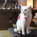 白猫と侍のコンビが織りなすツンデレ譚、『猫侍』の第二弾がドラマ化&映画化決定