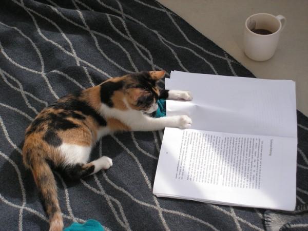 150208catdna 600x450 - 「ネコの移動の歴史」を探るゲノム解析研究成果が発表される