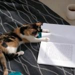 「ネコの移動の歴史」を探るゲノム解析研究成果が発表される