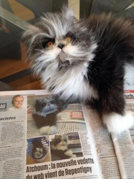 150209atchoum08 450x600 - 犬と見まごう多毛症の猫、その行動はやっぱり猫そのもの