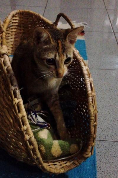 150214cat02 400x600 - 本日の美人猫vol.122