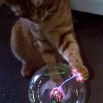 プラズマボールで遊ぶ猫、肉球が放つ光に夢中