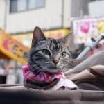 2015年も2/22は猫の日祭り!ネット各所の猫祭りまとめ (追記あり)
