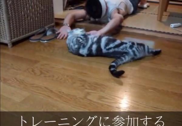 150304nekoaruaru 600x415 - 見れば見るほど頷きたくなる、「猫あるある」のまとめ動画