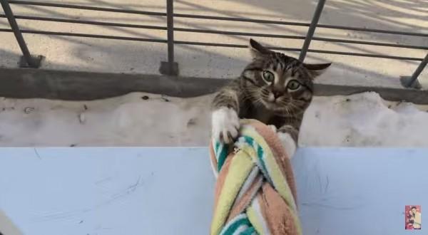 150318homecat 600x330 - 窓の下から見上げる猫、慣れた手つきでジャンピング帰宅