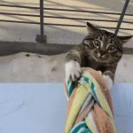 窓の下から見上げる猫、慣れた手つきでジャンピング帰宅