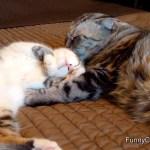 一方の眠気が伝う毛づくろい、深呼吸して眠りに落ちる