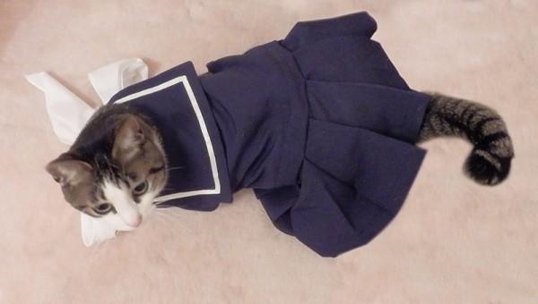 150408Sailorcat 600x340 - セーラー服を纏う猫、四月バカでもかわいさ満点