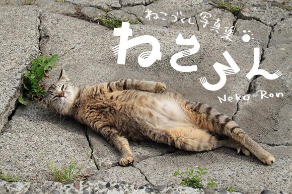 150518nekoron - 寝転び猫の写真だけ、集めに集めた写真集。クラウドファンディングにて出版記念個展の支援を募集