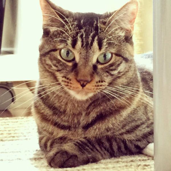 150521cat - 本日の美人猫vol.135