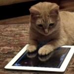 学研の猫関連電子書籍、50%OFFセール実施中。6月4日(木)まで