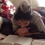 共に読書に勤しむ子猫、頭の上から覗きこみ