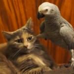 仏の顔も三度まで、足出す鳥に手が出る猫