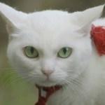 映画版『猫侍』の続編は、南の島へ。さりげなく黒猫も登場
