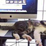 マウスに乗せたしっぽが動く、睡眠しながら仕事する猫