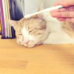 どこにでもある歯ブラシが、至福の猫マッサージアイテムと判明