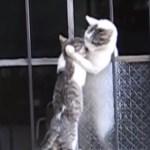 猫の母さん子猫を救助、窓の外から抱き上げる