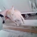 初めて心を開いた瞬間、迷子の子猫は目を細め