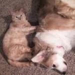猫の肉球マッサージ、心地伝わる犬の流し目
