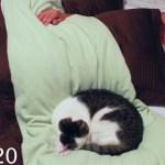 丸まりて人のベッドで眠る猫、二度寝をしたり踏み起こしたり