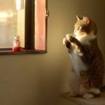 リアルサイズの招き猫、我も我もと福招く