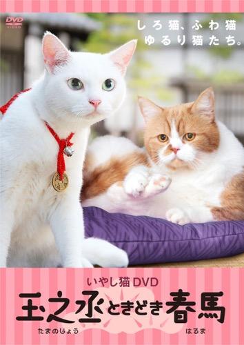150718DVD h500 - 「猫侍」スピンオフDVD第二弾、猫三昧のDVDが8月20日に発売