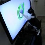 電源着いたら走り出す、XBOX起動時のあの球狙う黒白猫