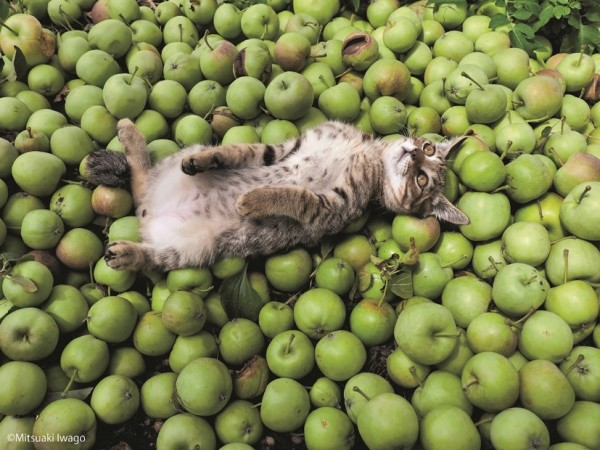 150723tsurugacat01 600x450 - ヒカリエで津軽の猫の写真展、「ふるさとのねこ」の四季の表情。猫写真持参で入場料2割引に