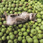 ヒカリエで津軽の猫の写真展、「ふるさとのねこ」の四季の表情。猫写真持参で入場料2割引に