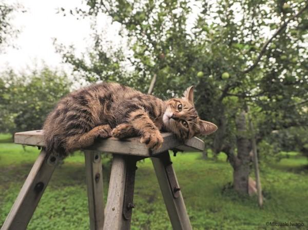 150723tsurugacat03 600x449 - ヒカリエで津軽の猫の写真展、「ふるさとのねこ」の四季の表情。猫写真持参で入場料2割引に