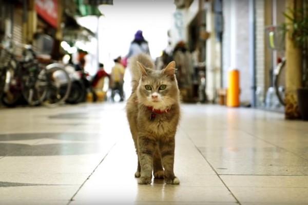 150901catStreetviewEC 600x400 - 尾道の街と猫とをストビューで、巡り探せる「広島 CAT STREET VIEW」