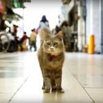 尾道の街と猫とをストビューで、巡り探せる「広島 CAT STREET VIEW」