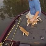 ボートで釣りに来た男、今日の釣果は猫2匹