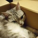 箱入り娘も箱入り息子も大集合、猫箱写真コンテストが開催中