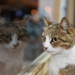 本日の美人猫vol.153